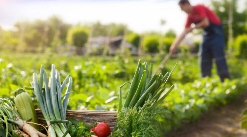 Se elimina la solicitud de calificación urbanística para 19 supuestos en instalaciones agrarias